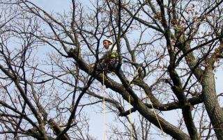 Großbaum-Beschnitt
